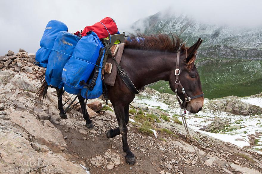 Pack Mule, Tour de Mont Blanc | Alex Hyde