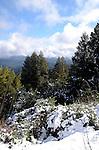 Snow in the Santa Cruz Mountains