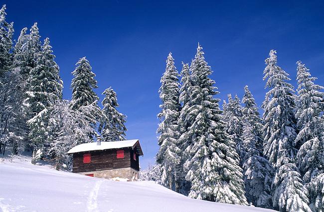 France, Haut-Rhin. Vosges alsaciennes. Sapins recouverts de neige *** Snow covered fir-trees, Vosges mountains. Haut-Rhin, France.