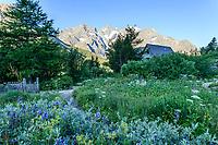 France, Hautes-Alpes (05), Villar-d'Arène, jardin alpin du Lautaret, le matin, le chalet Mirande et la flore des Alpes occidentales, en fond la Meije
