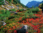 North Cascades National Park, WA <br /> Autumn foliage of huckleberry bushes accent the alpine meadows of Cascade Pass with Mix-up Peak in the distance.