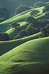 Oak trees and green grass on hills in spring, Briones Regional Park, Contra Costa County, California