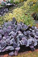 Vegetables & Flowers interplanted