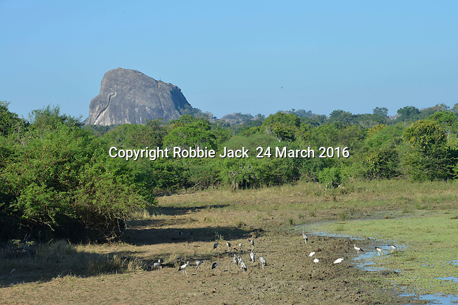 Yala National Park Sri Lanka<br /> Asian Open Billed Storks, Black Headed Ibis and White Breasted Kingfisher