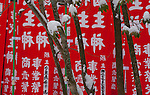 Snowy courtyard, Yudanaka Onsen, Japan