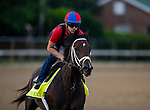 LOUISVILLE, KENTUCKY - MAY 01: Cutting Humor prepares for the Kentucky Derby at Churchill Downs in Louisville, Kentucky on May 01, 2019. Evers/Eclipse Sportswire/CSM