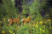 Two deer.<br />