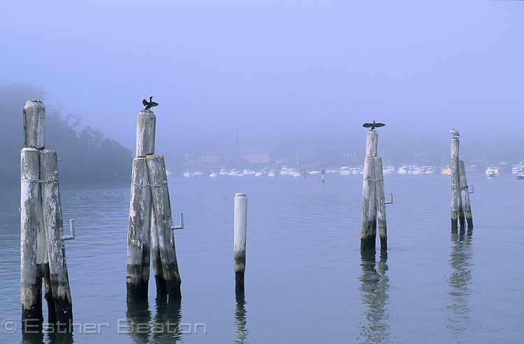 Old pylons in Sandbrook Inlet with roosting cormorants, pelicans. Brooklyn, yachts in bkgd, Long Island Nature Reserve on left. Hawkesbury R, NSW