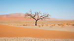 A Tree Stripped Of Its Leaves For Winter In Sossuvlei.