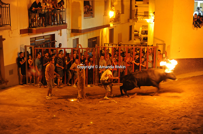 "A man pulls on the tail of the bull after flaming charcoal is affixed to the bull's horns to get it worked up to chase villagers as it runs through the streets during the municipal fiestas in Costur, Spain on August 19, 2009.  For several days, wild bulls and cows take their turn roaming the streets and square surrounding the church in Costur as people jump in and out of human cages to taunt and animate them; the ""embolado"" is a tradition that pre-dates electricity so people would be able to see the illuminated bull as he runs through the darkened streets."