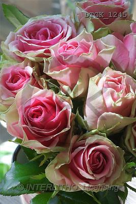 Gisela, FLOWERS, photos(DTGK1245,#F#) Blumen, flores, retrato