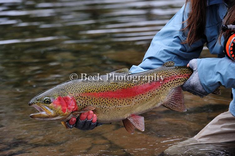 Winter Fly Fishing