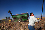 Keyna Baalman covers a truckload of harvested milo for transport on the family's 12,000-acre farm outside of Hoxie, Kan., on Thursday, Oct. 11, 2012. As historically dry conditions continue, farmers from South Dakota to the Texas panhandle rely on the Ogallala Aquifer, the largest underground aquifer in the United States, to irrigate crops. After decades of use, the falling water level ? accelerated by historic drought conditions over the last two years ? is putting pressure on farmers to ease usage or risk becoming the last generation to grow crops on the land. Farmers like Mitchell Baalman and Brett Oelke (both not pictured), are part of a farming community in in Sheridan County, Kansas, an agricultural hub in western Kansas, who have agreed to cut back on water use for crop irrigation so that their children and future generations can continue to farm and sustain themselves on the High Plains.