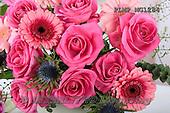Marek, FLOWERS, BLUMEN, FLORES, photos+++++,PLMPMG1284,#f# roses
