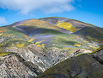Colorful wildflowers cover the Temblor Range, Carrizo Plain National Monument, San Luis Obispo County, Calif.