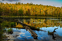 Reflections, Dix Mountain Wilderness Area, Adirondack Forest Preserve, New York