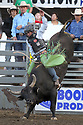 20 Aug 2014: Chandler Bownds was not able to score in the second round of the Seminole Hard Rock Extreme Bulls competition at the Kitsap County Stampede in Bremerton, Washington.