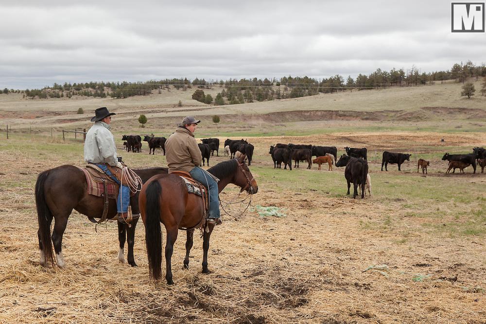 Pine Bluffs Wy >> Cattle Branding At The Gross Wilkinson Ranch In Pine Bluffs