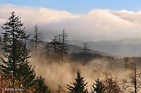Trees in mist at sunrise, from Clingmans Dome, Great Smoky Mountains National Park, TN/NC