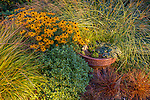 Vashon-Maury Island, WA: Summer perennial garden with blooming Rudbeckia fulgida 'Goldsturm', and Pheasant's-tail grass (Anemanthele lessoniana)
