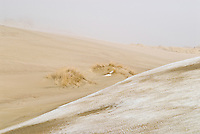 Snow covered sand dunes in winter, Curonian spit, Nida, Lithuania