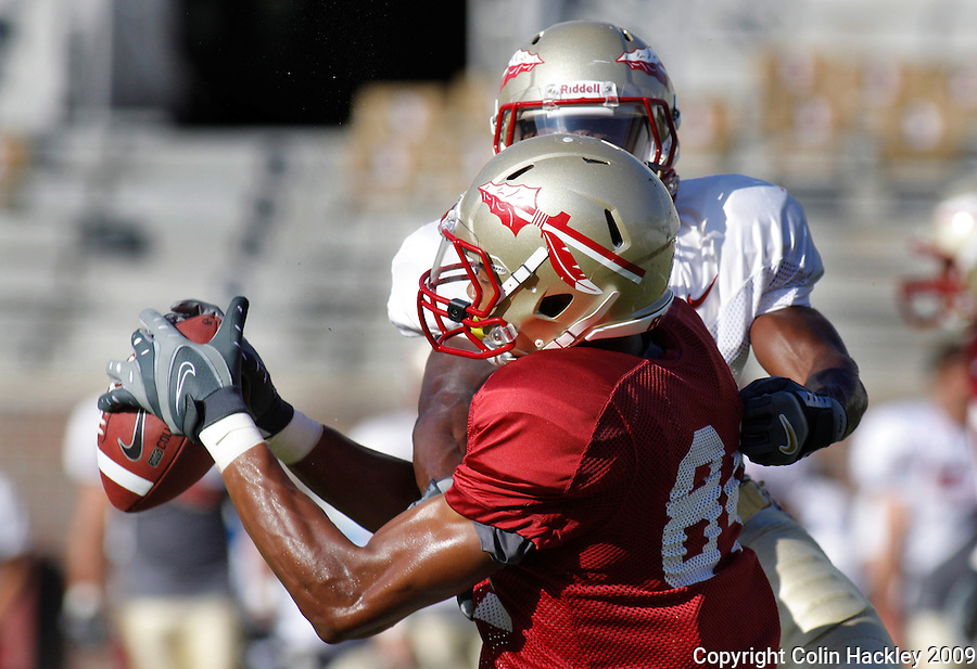 TALLAHASSEE, FL. 8/22/09-FSU-SMITH 0822 CH01-Florida State's Rodney Smith gets a handle on the ball as Greg Reid closes prior to the scrimmage Saturday in Tallahassee...COLIN HACKLEY PHOTO