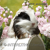 Xavier, ANIMALS, REALISTISCHE TIERE, ANIMALES REALISTICOS, photos+++++,SPCHGUINEA85,#A#, EVERYDAY ,funny