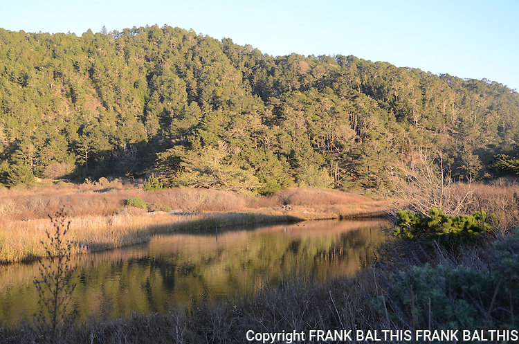West Waddell Creek in Big Basin State Park