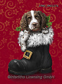 Marcello, CHRISTMAS ANIMALS, WEIHNACHTEN TIERE, NAVIDAD ANIMALES, paintings+++++,ITMCXM2127A,#xa# ,dog,shoe,boot,