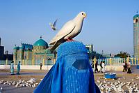 Mazar-e Sharif, Afghanistan 2007. Pilgrims at the Blue Mosque.