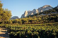 Europe/France/Provence-Alpes-Côte d'Azur/84/Vaucluse/Gigondas: Les Dentelles de Montmirail et le vignoble de Gigondas (AOC Côtes-du-Rhône-Village) - En fond le sommet du Mont Ventoux (1909 mètres)