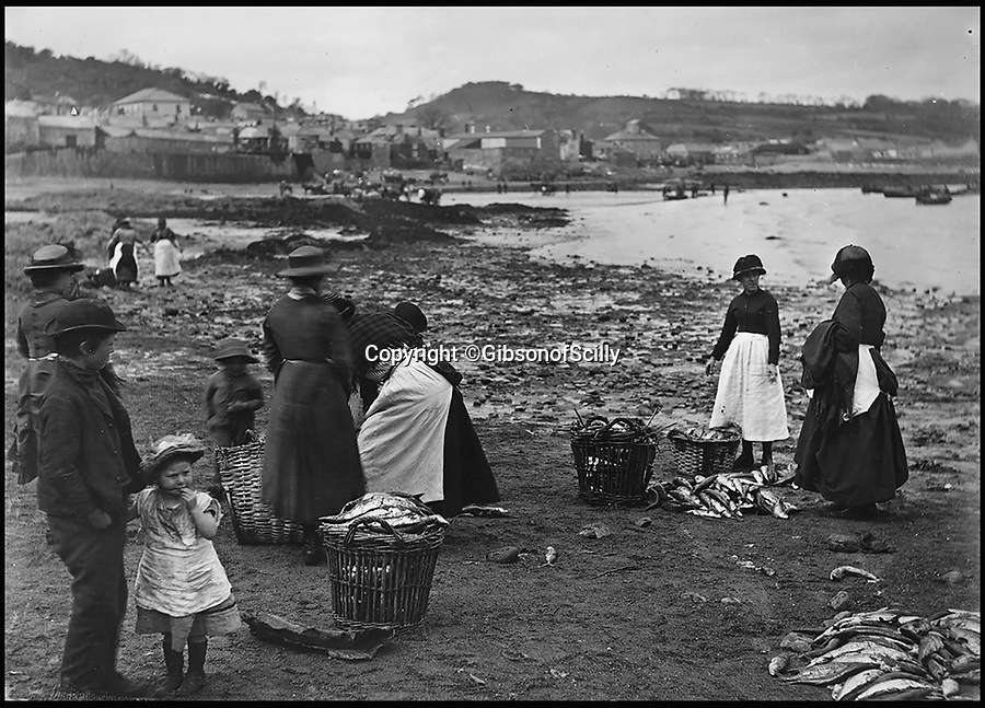BNPS.co.uk (01202 558833)<br /> Pic: GibsonOfScilly/BNPS<br /> <br /> Newlyn Fishwifes.<br /> <br /> An archive of eye-opening photographs documenting the grim reality of Poldark's Cornwall has emerged for sale for £25,000.<br /> <br /> More than 1,500 black and white images show the gritty lives lived by poverty-stricken families in late 19th and early 20th century Cornwall - around the same time that Winston Graham's famous Poldark novels were set.<br /> <br /> The collection reveals the lowly beginnings of towns like Rock, Fowey, Newquay and St Ives long before they became picture-postcard tourist hotspots.<br /> <br /> Images show young filth-covered children playing barefoot in squalid streets, impoverished families standing around outside the local tax office, and weather-beaten fishwives tending to the day's catch.<br /> <br /> The Cornish archive, comprising 1,200 original photographic prints and 300 glass negative plates, is tipped to fetch £25,000 when it goes under the hammer as one lot at Penzance Auction House.