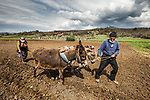 READY.  DATE:  24/04/20<br /> <br /> <br /> <br /> <br /> Farmers using traditional methods of farming cover their faces during the coronavirus pandemic in Eastern Anatolia Region, Turkey. Farmers ploughing a field with a pair of donkeys are having to continue to work through while wearing face masks for some protection.<br /> <br /> The streets have been a forbidden place for people to venture out during lockdown rules, but farmers have been grainted special permission to continue their daily duties. <br /> <br /> Please byline: Seyit Konyali/Solent News<br /> <br /> © Seyit Konyali/Solent News & Photo Agency<br /> UK +44 (0) 2380 458800