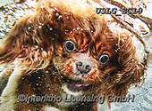 REALISTIC ANIMALS, REALISTISCHE TIERE, ANIMALES REALISTICOS, dogs, paintings+++++SethC_BUSTER_WATER_IMG_6157rev,USLGSC19,#A#, EVERYDAY ,underwater dogs,photos,fotos ,Seth