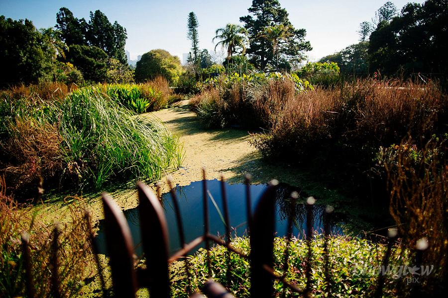 Image Ref: M301<br /> Location: Royal Botanical Gardens, Melbourne<br /> Date: 10.06.17