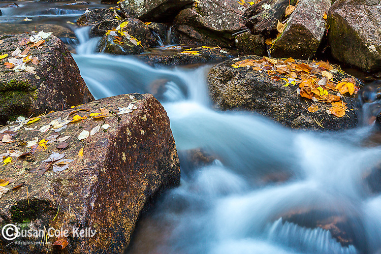 Jordan Stream in Acadia National Park, Maine, USA