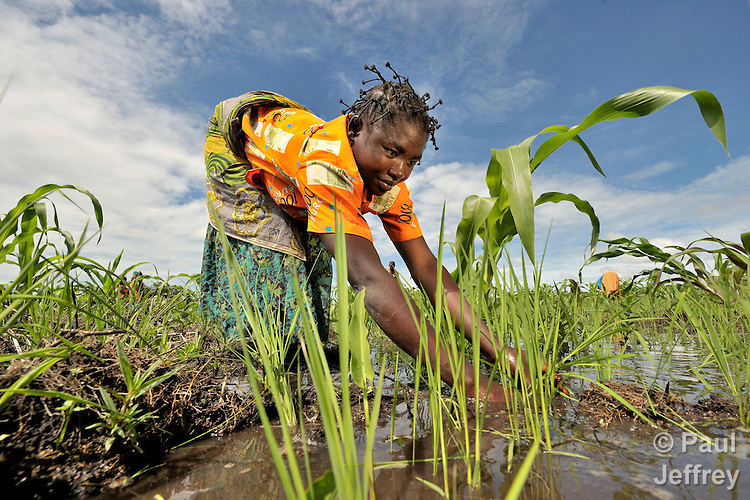 A woman planting rice as part of a community agriculture project outside Kamina, in the Democratic Republic of the Congo. Sponsored by the United Methodist Committee on Relief (UMCOR), the project increases food security in poor communities, especially for women and children.