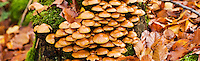 Mushrooms on tree trunk in Autumn, Oberpfalz, Bavaria, Germany