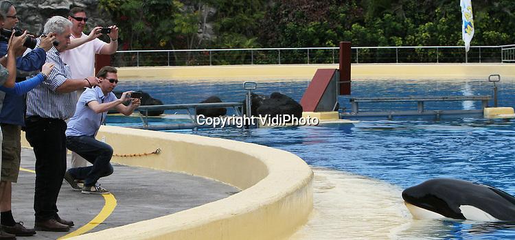 Foto: VidiPhoto..PUERTO DE LA CRUZ - In de dierentuinwereld is vrijdag met grote verontwaardiging gereageerd op het nieuws van de actiegroep WDCS (Whale and Dolphin Conservation Society) en de Orkacoalitie dat orka Morgan in Loro Parque op Tenerife deze week zwaar gewond zou zijn geraakt. Een foto van Morgan met zware verwondingen werd donderdag gepubliceerd op de site van WDCS. Een delegatie van fotojournalisten en dierentuinmedewerkers heeft deze week een bezoek gebracht aan Morgan en geconstateerd dat het dier zich prima vermaakt in het bassin en zelfs een vriendje heeft. Uit nadere bestudering van de WDCS-foto blijkt dat de verwondingen met een kloonstempel lijken te zijn aangebracht en dat hier gaat om een foto van minstens een maand oud. Deze week gemaakte foto's van Morgen laten zien dat het dier geen (verse) verwondingen heeft en dat de littekens niet overeenkomen met de diepe wonden op de foto van WDCS..