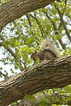 Wild Animals: Rodent
