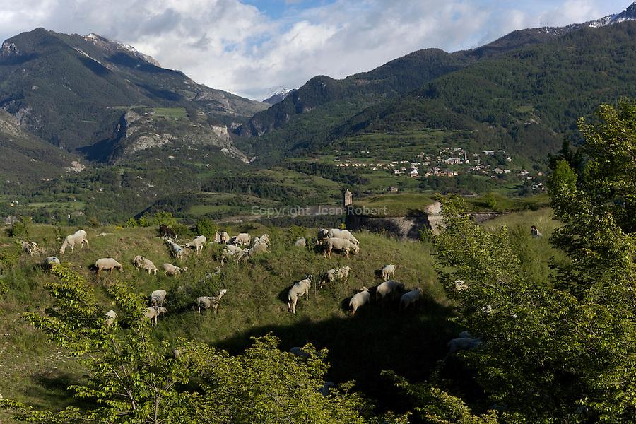 troupeau de moutons sur la place forte de Mont-Dauphin construite par Vauban &agrave; partir de 1693, inscrite en 2008 au Patrimoine mondial de l'UNESCO.<br /> Mont-Dauphin castle built by Vauban in 1693, on the Unesco list since 2008