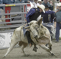 "29 August, 2004:  PRCA Rodeo Bull Rider Ryan Howard  riding the bull ""Early Times"" during the PRCA 2004 Extreme Bulls competition in Bremerton, WA."