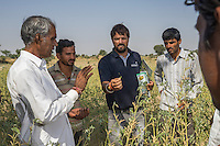 Piyush Tiwari, Assistant Project Manager at Technoserve, provides field training to a group of guar farmers in the Technoserve Guar Demo Plot in Kheeyara village, Bikaner, Rajasthan, India on October 24th, 2016. Non-profit organisation Technoserve works with farmers in Bikaner, providing technical support and training, causing increased yield from implementation of good agricultural practices as well as a switch to using better grains better suited to the given climate. Photograph by Suzanne Lee for Technoserve