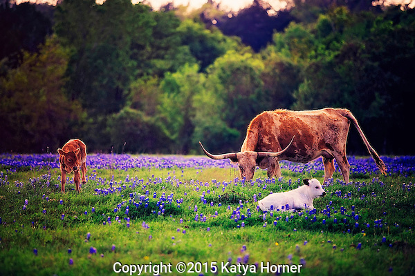 Springtime in Washington County, Texas.