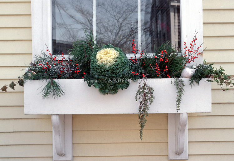 Winter Windowbox Garden with ornamental kale vegetable berries ivy evergreen branches & Windowbox on house in winter | Plant u0026 Flower Stock Photography ... Aboutintivar.Com