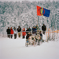 Reindeer racing in Lapland, Sweden