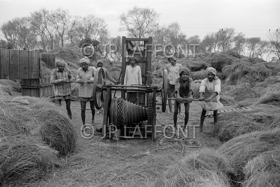 1970, Punjab, India --- Farmers harvest hay in the Punjab. --- Image by © JP Laffont