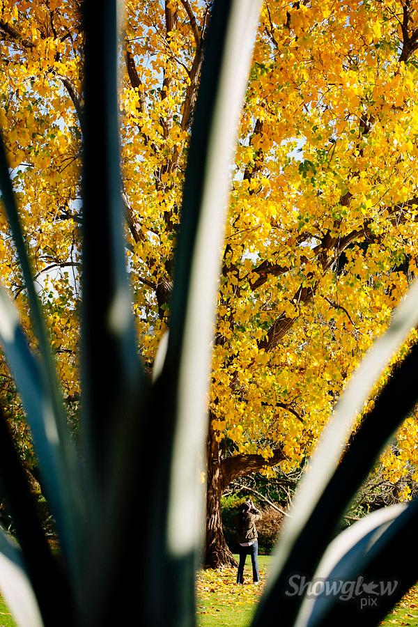 Image Ref: M294<br /> Location: Royal Botanical Gardens, Melbourne<br /> Date: 10.06.17