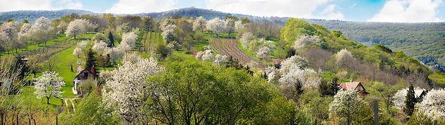Korseg Vineyards in spring, Hungary