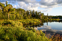 Lush green foliage lines the shore of Swamper Lake along the Gunflint Trail in northern Minnesota.
